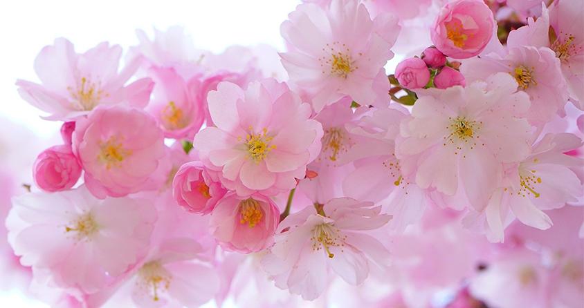 É Primavera! A AEA/BA e o Coral Aquarela comemoram a chegada da mais florida das estações